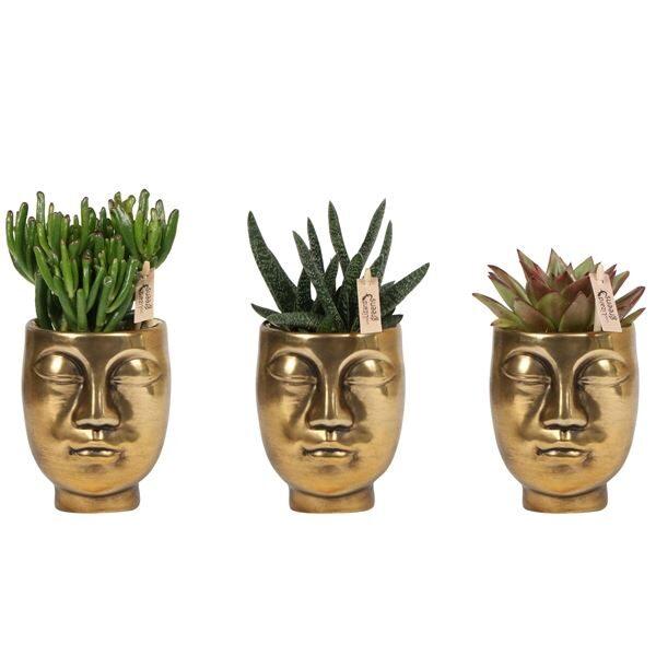 Face Plant Pots & Miniplants